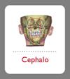 Cephalometrie